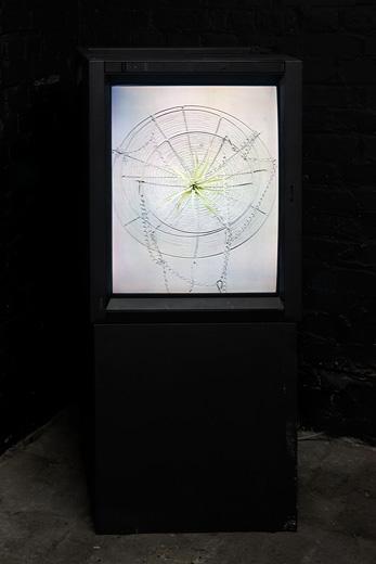 Jasper-Spicero-Plant-Display
